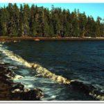 Sandy Beach Shores