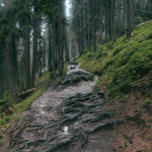 rain trail