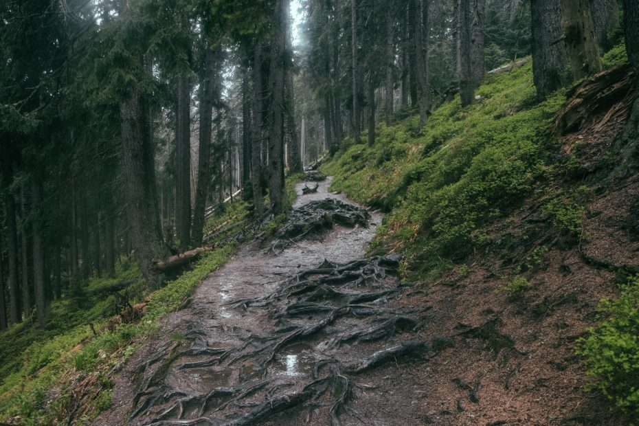 Sharing Ketchikan's Trails